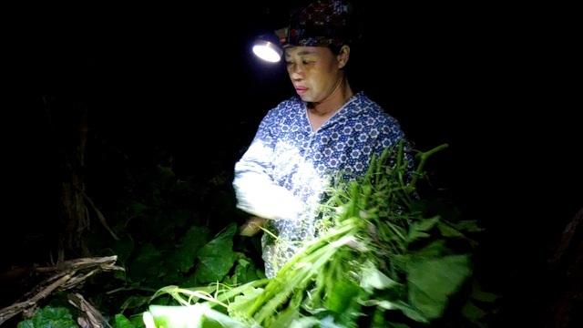 Dậy từ 2 giờ hái rau bí, kiếm tiền triệu nơi bãi giữa sông Hồng