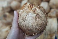 Ngày bán 5.000 quả dừa tí hon, hàng lạ gây sốt mùa nắng cháy