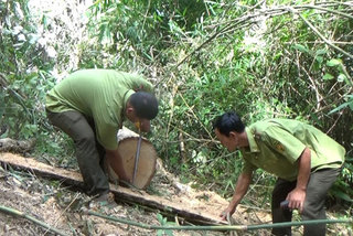 Minister calls for forest protection and management efforts