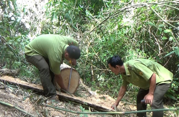 Dak Lak,illegal forest exploitation,illegal trade of forest products,community-based forest management