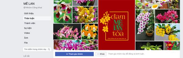 Mê Lan - địa chỉ dành cho tín đồ hoa lan