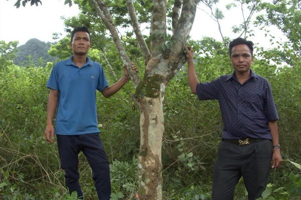 'Vương quốc' gỗ sưa bí mật ở Phong Nha - Kẻ Bàng