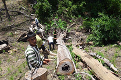 Seven loggers arrested in Gia Lai
