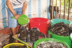 Ca Mau's traditional sauce recognised as national cultural heritage