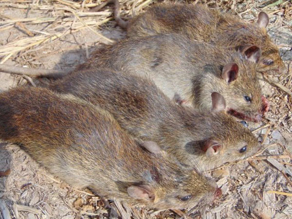 Wildlife supply chains for human consumption increases coronaviruses' transmission risk to people