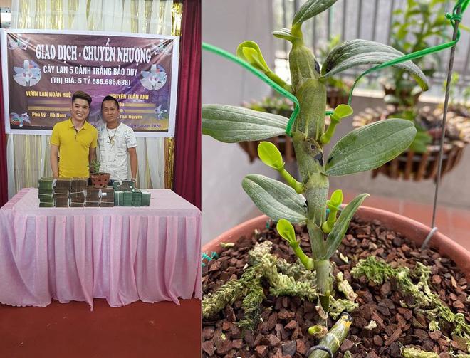 Cây lan Bảo Duy 5 cánh trắng giá 5,6 tỷ đồng của đại gia Thái Nguyên
