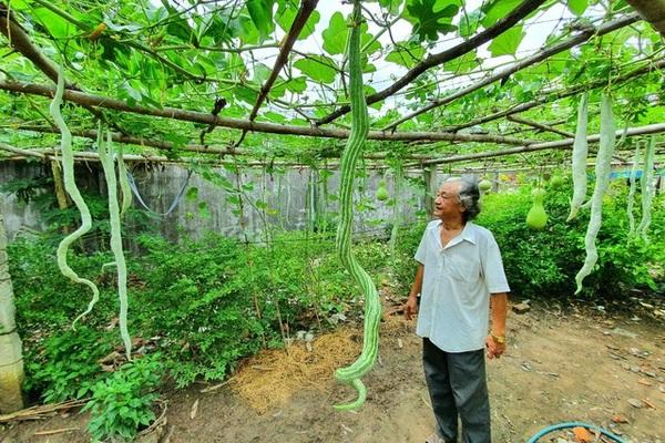 'Vua bầu khổng lồ' miền Tây sở hữu giàn mướp có trái dài đến 2m