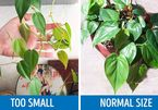 8 dấu hiệu và cách xử lý sâu bệnh cho cây trồng trong nhà