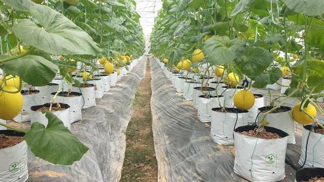 8X biến đồng trũng thành khu nông nghiệp công nghệ cao, thu hàng trăm triệu