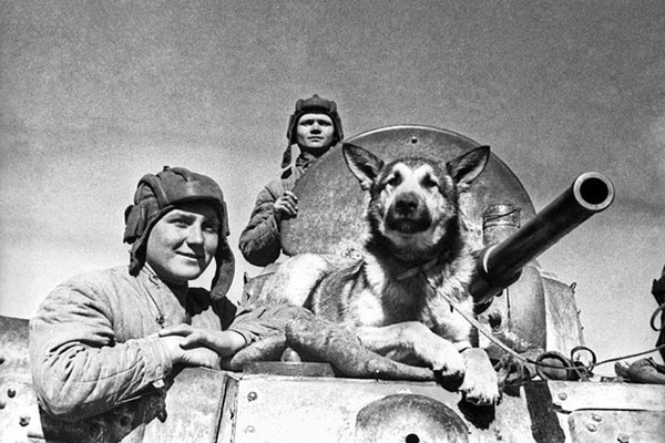 Những 'người lính' bốn chân quả cảm của Liên Xô