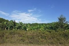 Hàng xóm mượn đất trồng trọt rồi không chịu trả lại