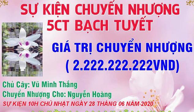 3 mầm lan Bạch tuyết bán 2,2 tỷ đồng ( trích Vietnamnet.vn)