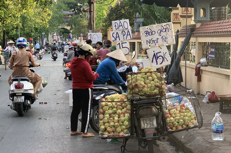 Dân buôn tiết lộ sự thật về đào Sa Pa bán tràn ngập chợ