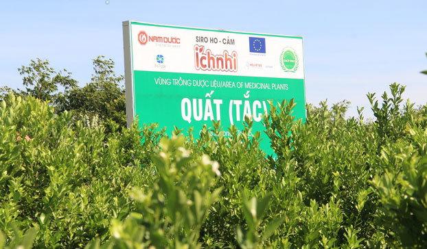 Nam Định: Trồng loại quất 'ăn sạch, ở sạch', lời nửa tỷ đồng mỗi năm