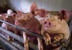 Phát hiện virus cúm mới có thể bùng thành đại dịch ở Trung Quốc