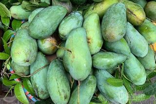 Tin buồn đầu mùa: Xoài Việt dội chợ, giá rẻ hơn rau