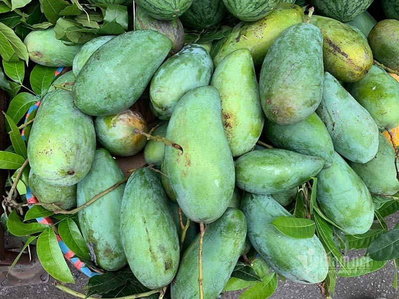 Xoài khổng lồ xuất hiện tràn khắp chợ Hà Nội