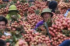 China remains major market for Vietnam's farm produce