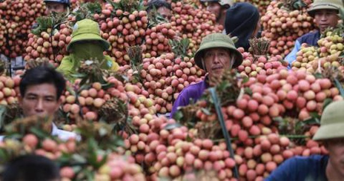 China remains major market for Vietnam's farm produce