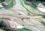 Alluring terraced rice fields in Son La