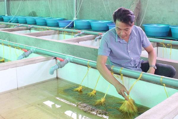 Bỏ lương cao ở Nhật Bản, trai Vĩnh Long về quê 'nghịch nước' nuôi lươn