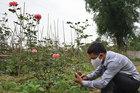 Một nông dân thu 1 tỷ đồng mỗi năm nhờ trồng hoa hồng cổ