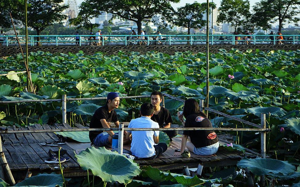 Thu nhập 'khủng' nhờ trồng sen Hồ Tây