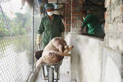 Khởi tố trưởng ban thú y ở Hải Dương chiếm 219 triệu tiền hỗ trợ dịch tả lợn