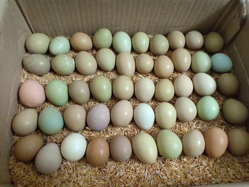 Loại trứng xanh đỏ khác lạ đắt gấp 15 lần, bà nội trợ lùng mua - kết quả xổ số trà vinh