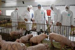 Bộ trưởng Nguyễn Xuân Cường: Về lâu dài phải phát triển đàn lợn trong nước