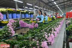 Da Lat - hub of flower exports