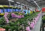 Da Lat - hub of flower exports
