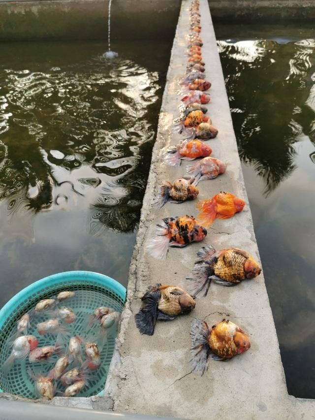 Bể cá cảnh đẹp như mơ giá nửa tỷ đồng chết sạch chỉ vì sự cố
