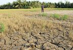Drought in Mekong Delta worsens due to hydropower, water diversion