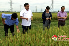VN develops new rice variety for flood and drought-prone areas
