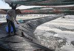 High-techshrimp breeding yields high profits for Vietnamese farmers
