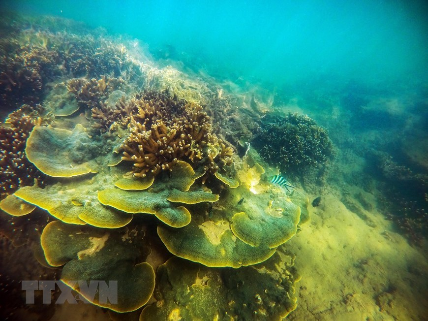 Beauty of coral reefs in Ninh Thuan