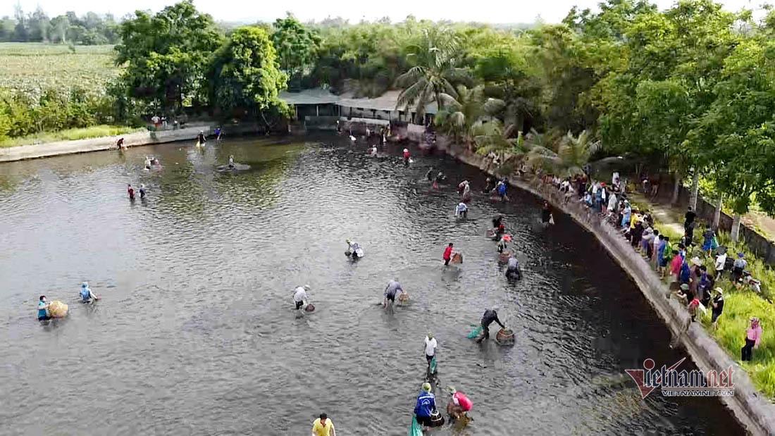 Hàng trăm người ở Nghệ An ào xuống ao thi bắt cá