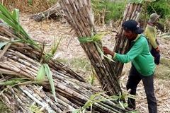 Vietnam initiates anti-dumping investigation on corn syrup