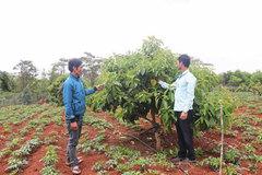Cơ hội làm giàu từ chuyển đổi vườn tạp, cây trồng