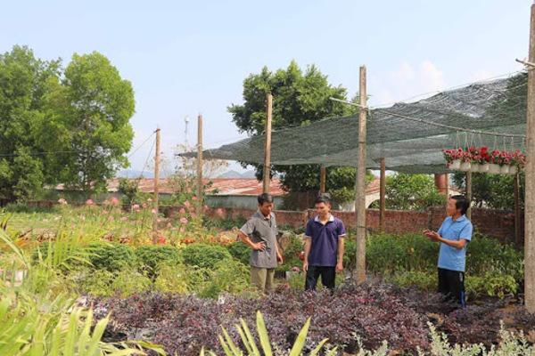 Mô hình nông hội ở Gia Lai giúp dân thoát nghèo bền vững