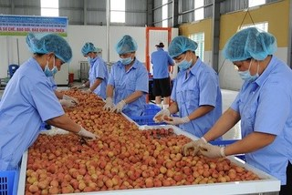 State needs to help cut logistics cost for Vietnamese farm produce