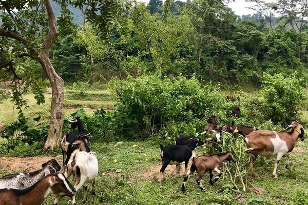 Bớt nghèo nhờ đổi mới cách làm ăn: Kết hợp chăn nuôi với trồng trọt