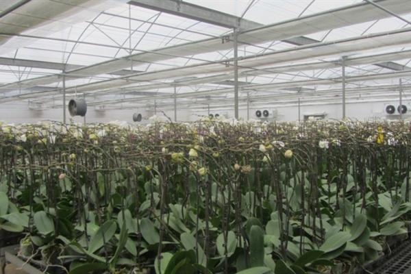 Dân Thôn Bến thoát nghèo bền vững nhờ trồng hoa