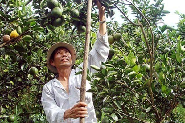 Thoát nghèo nhờ làm vườn thuận thiên
