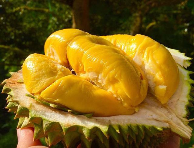 Loại sầu riêng 1,6 triệu đồng/kg khiến hoa hậu Kỳ Duyên 'tan chảy'