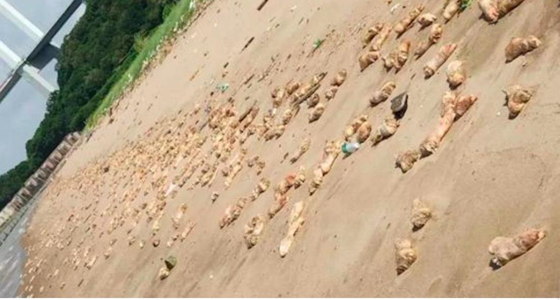 Bí ẩn hàng nghìn chân giò lợn dạt vào bờ biển Trung Quốc