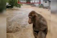 Chùm ảnh động vật khốn đốn trong cảnh lũ lụt ở Trung Quốc