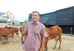 Người đàn ông nghỉ việc nhà nước lập trang trại chăn bò giữa Sài Gòn