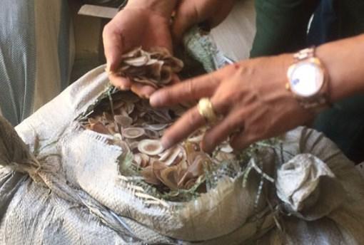 Phát hiện hơn 100 tấn nguyên liệu làm thuốc đông y nhập khẩu không khai báo